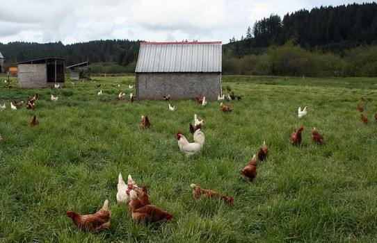 Housing for Poultry - Chicken Coop Plans