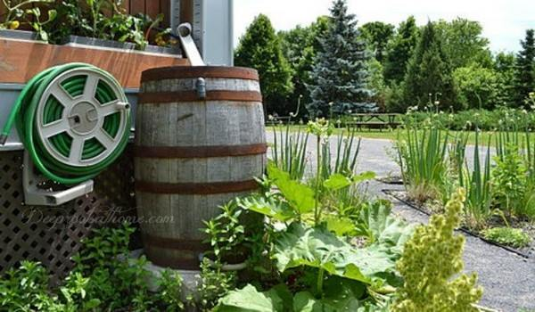 Ramblings about Rain Barrels